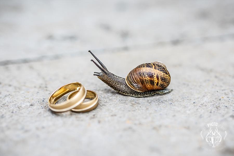Fotógrafos de boda en España
